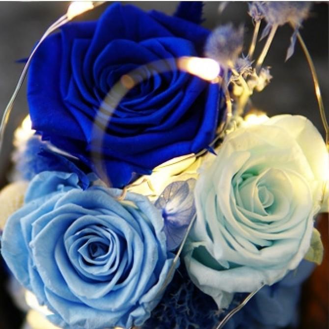 Glass Dome Roses / String Fairy Light Gift- Blue