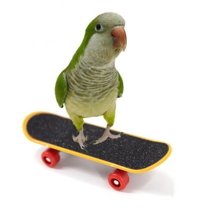 Small Bird Skateboard
