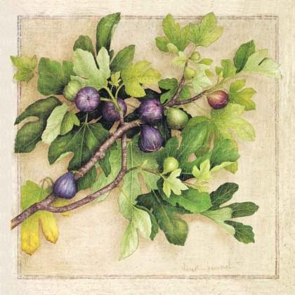 Branche de Figuier Canvas Print
