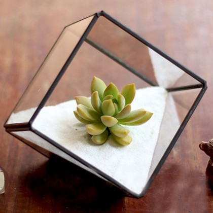 Geometric Glass Terrarium F