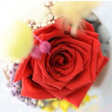 Red Eternal Rose in Glass Colors Changing Night Light